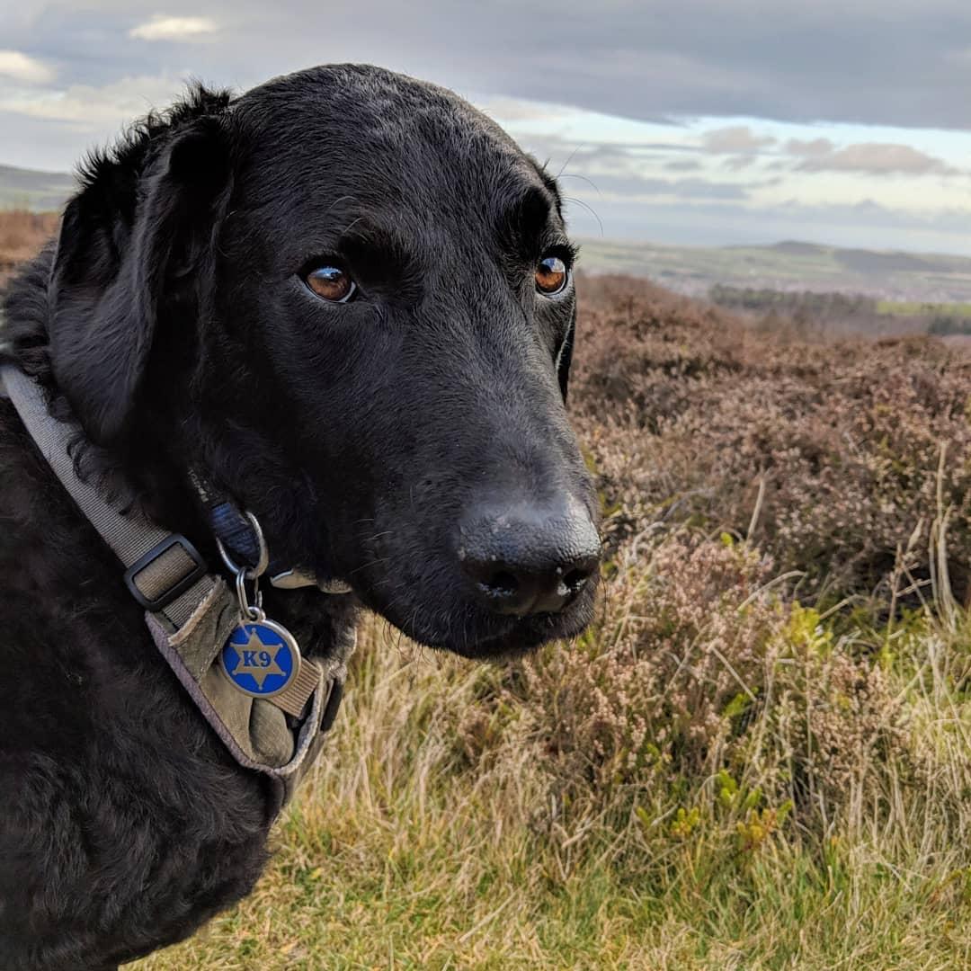 Ollie Dog
